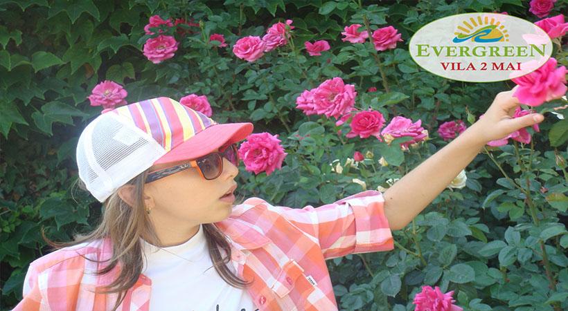 Trandafiri Balcic
